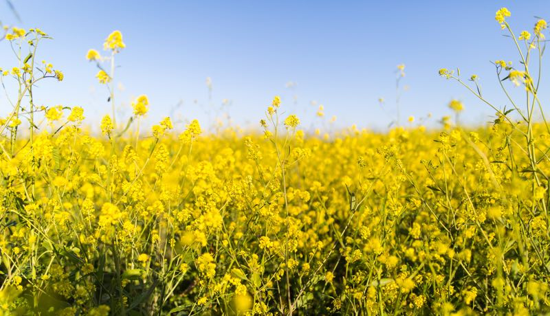 It's hayfever time but Inside Out Health Reigate has some solutions to help